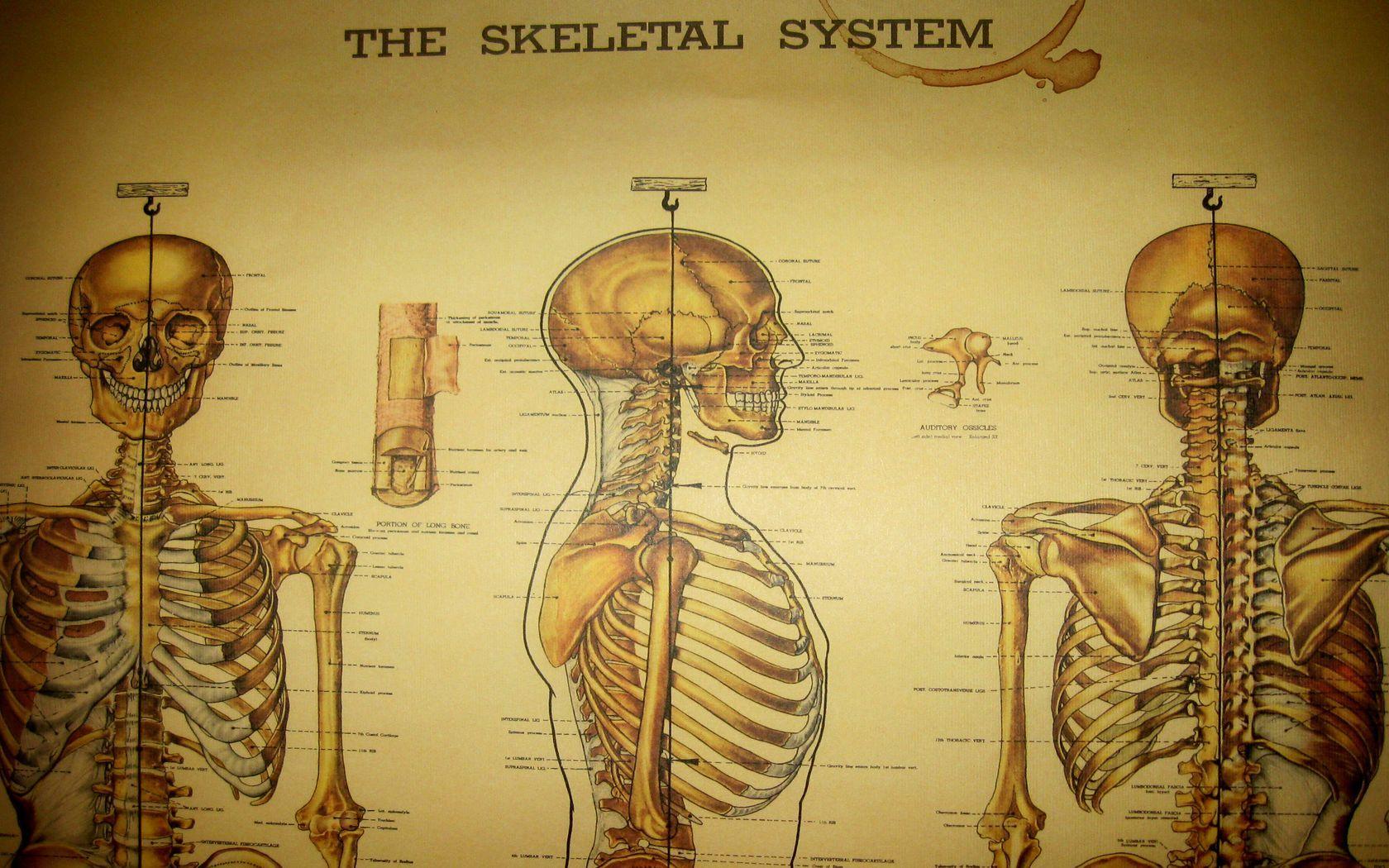 Teahub.io Medical Wallpaper 203451, بنیاد فرهنگ تغذیه | حکیم رضی